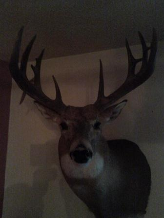 2009 White Tail Deer Image