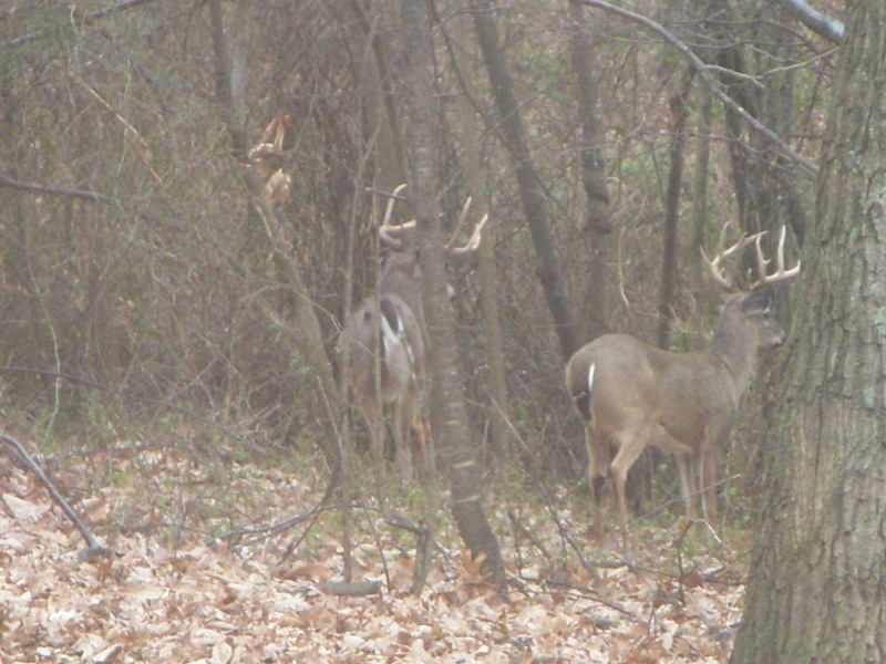 2019 Big Game Antelop and Deer